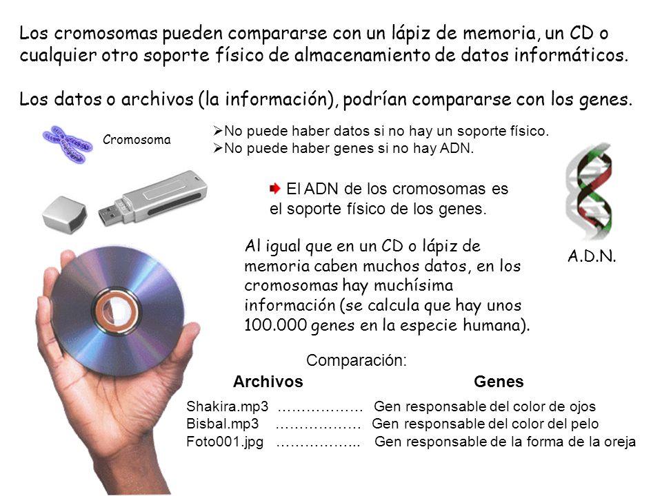 Los cromosomas pueden compararse con un lápiz de memoria, un CD o cualquier otro soporte físico de almacenamiento de datos informáticos. Los datos o a