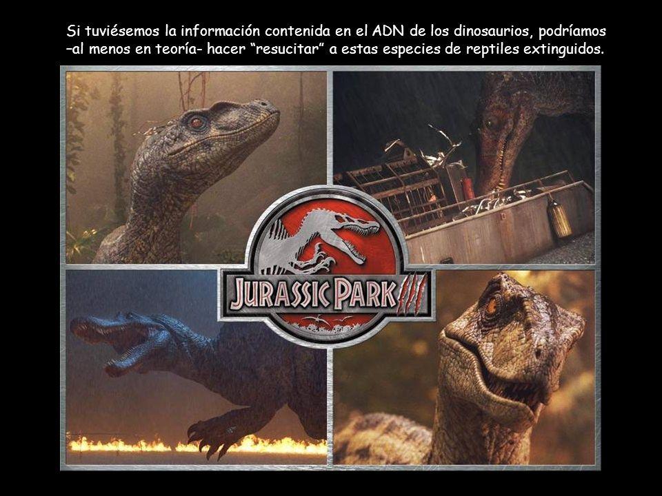 Si tuviésemos la información contenida en el ADN de los dinosaurios, podríamos –al menos en teoría- hacer resucitar a estas especies de reptiles extin