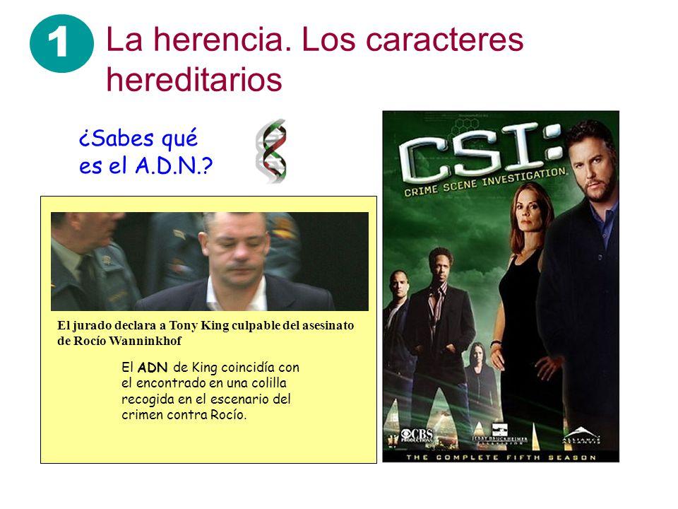 1 La herencia. Los caracteres hereditarios ¿Sabes qué es el A.D.N.?