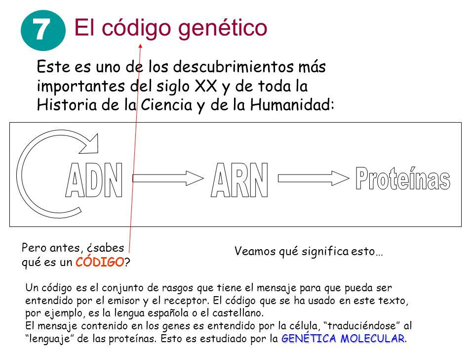 7 El código genético Este es uno de los descubrimientos más importantes del siglo XX y de toda la Historia de la Ciencia y de la Humanidad: Veamos qué