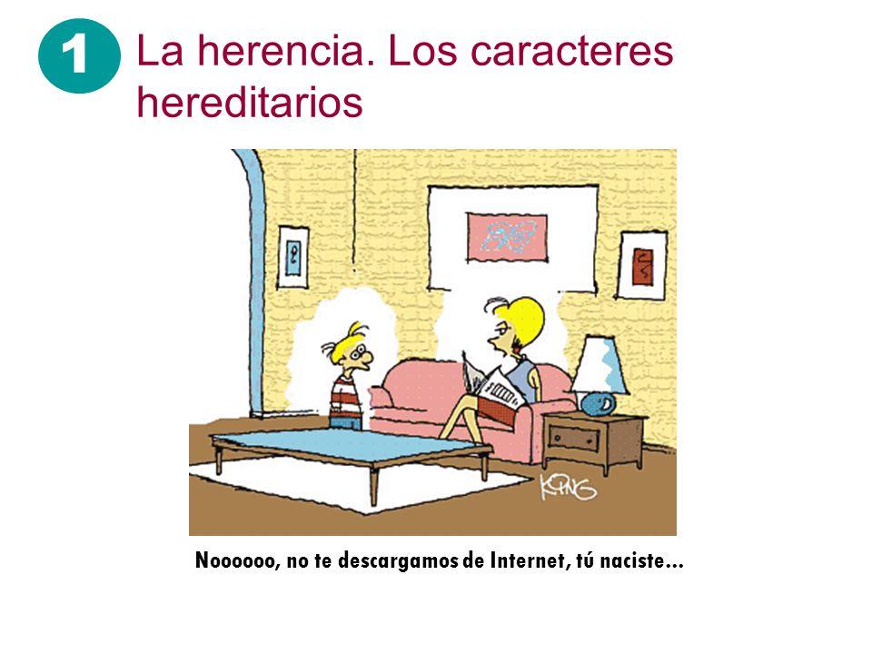 Gregorio Mendel 1 La herencia.