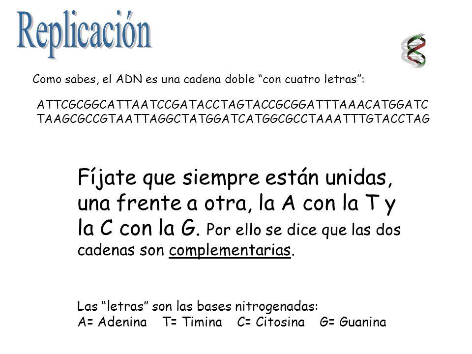 ATTCGCGGCATTAATCCGATACCTAGTACCGCGGATTTAAACATGGATC TAAGCGCCGTAATTAGGCTATGGATCATGGCGCCTAAATTTGTACCTAG Como sabes, el ADN es una cadena doble con cuatro