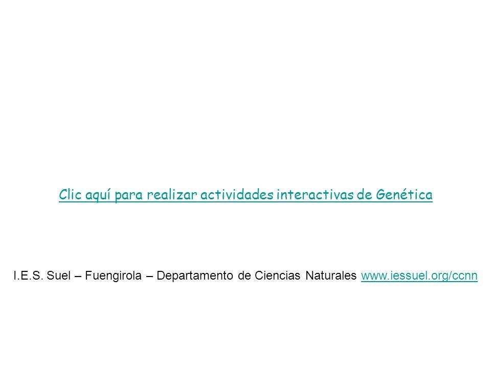 Clic aquí para realizar actividades interactivas de Genética I.E.S. Suel – Fuengirola – Departamento de Ciencias Naturales www.iessuel.org/ccnnwww.ies