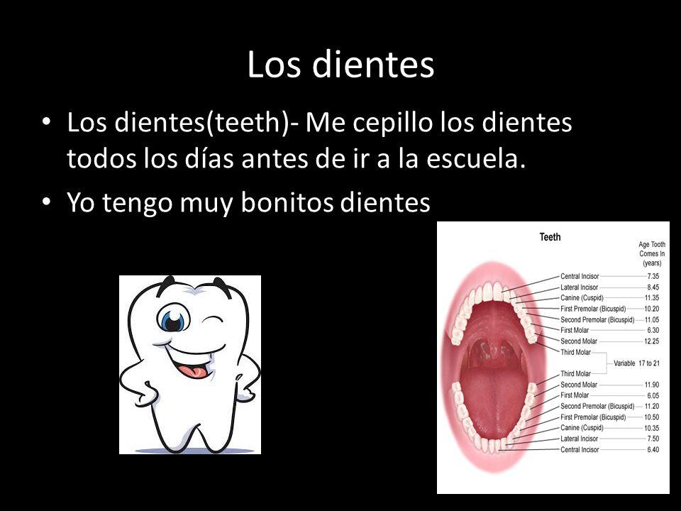 Los dientes Los dientes(teeth)- Me cepillo los dientes todos los días antes de ir a la escuela. Yo tengo muy bonitos dientes