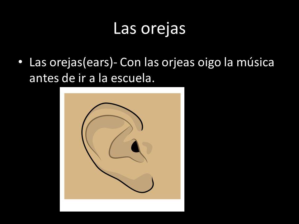 Las orejas Las orejas(ears)- Con las orjeas oigo la música antes de ir a la escuela.