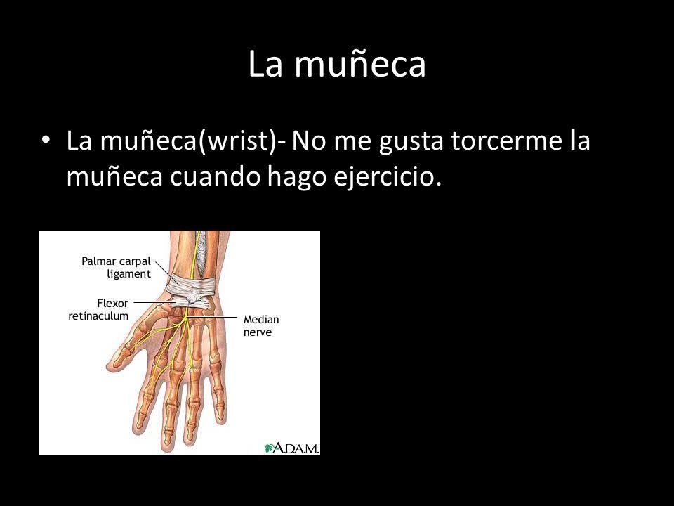 La muñeca La muñeca(wrist)- No me gusta torcerme la muñeca cuando hago ejercicio.