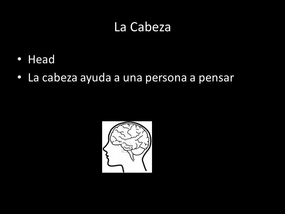 La Cabeza Head La cabeza ayuda a una persona a pensar