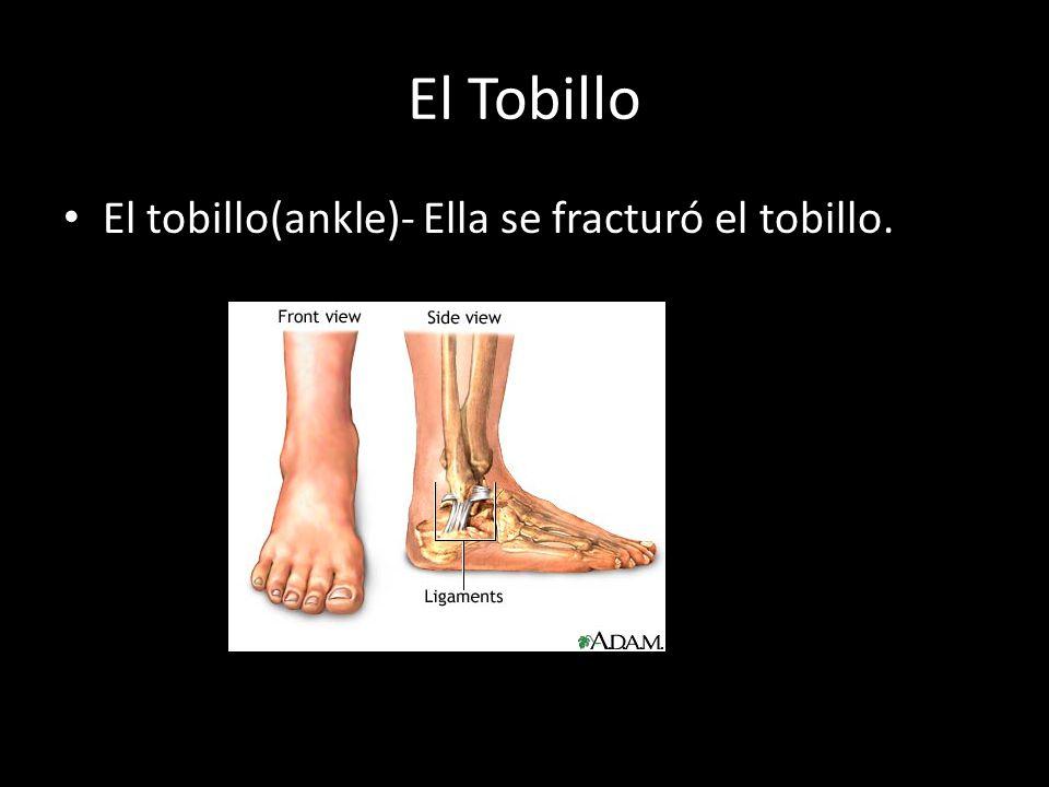 El Tobillo El tobillo(ankle)- Ella se fracturó el tobillo.