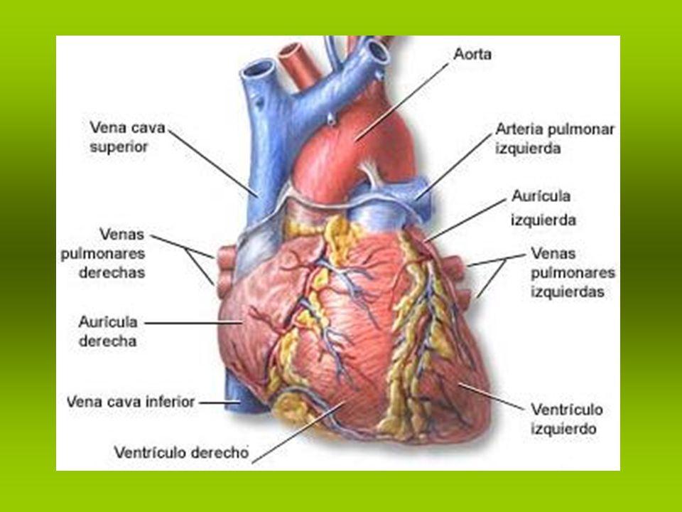 Enfermedades no infecciosas. Enfermedades cardiovasculares.
