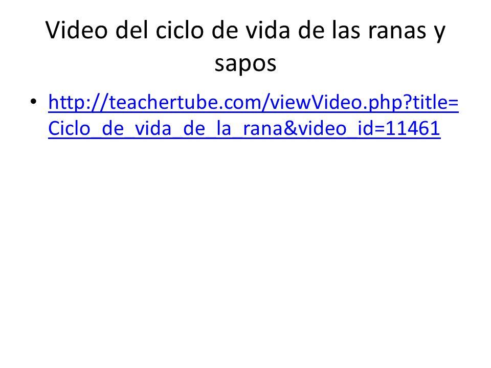 Video del ciclo de vida de las ranas y sapos http://teachertube.com/viewVideo.php?title= Ciclo_de_vida_de_la_rana&video_id=11461 http://teachertube.com/viewVideo.php?title= Ciclo_de_vida_de_la_rana&video_id=11461