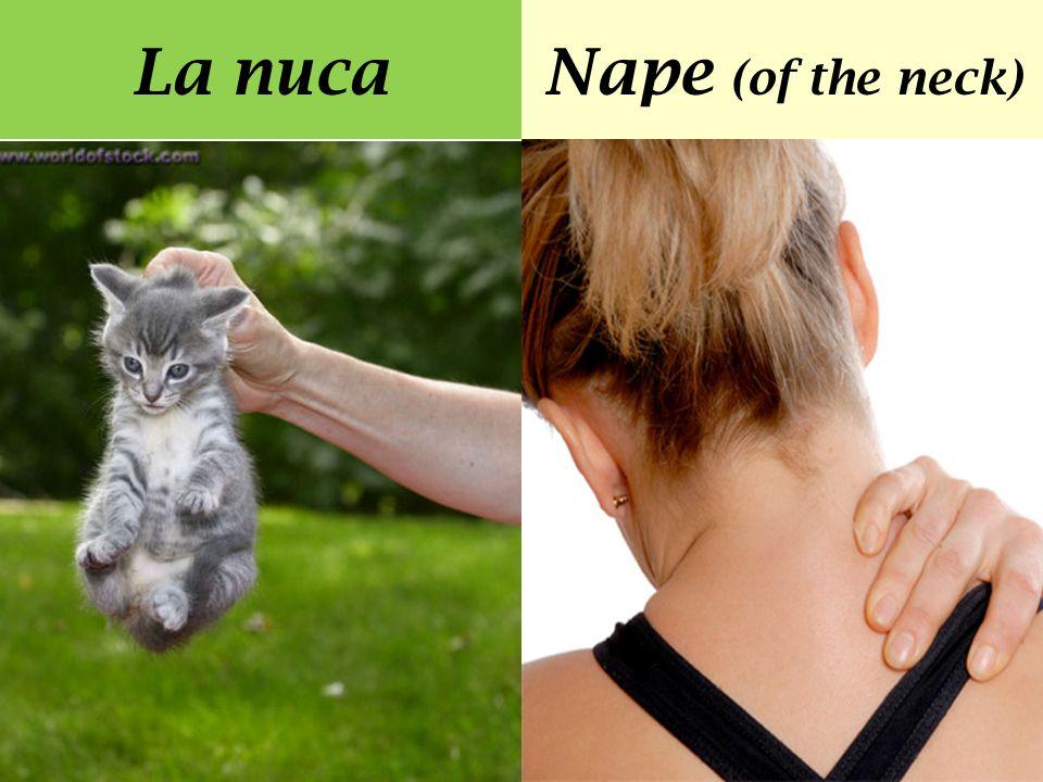 La nucaNape (of the neck)