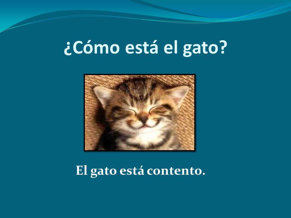 ¿Cómo está el gato? El gato está contento.