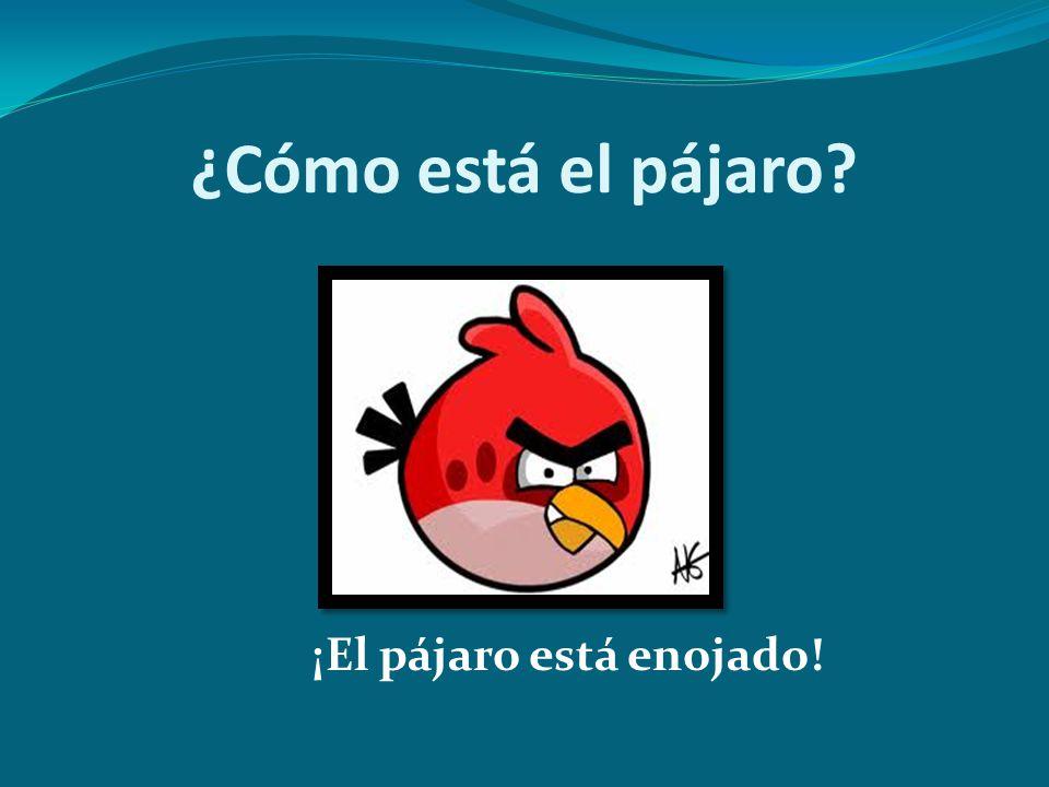 ¿Cómo está el pájaro? ¡El pájaro está enojado!
