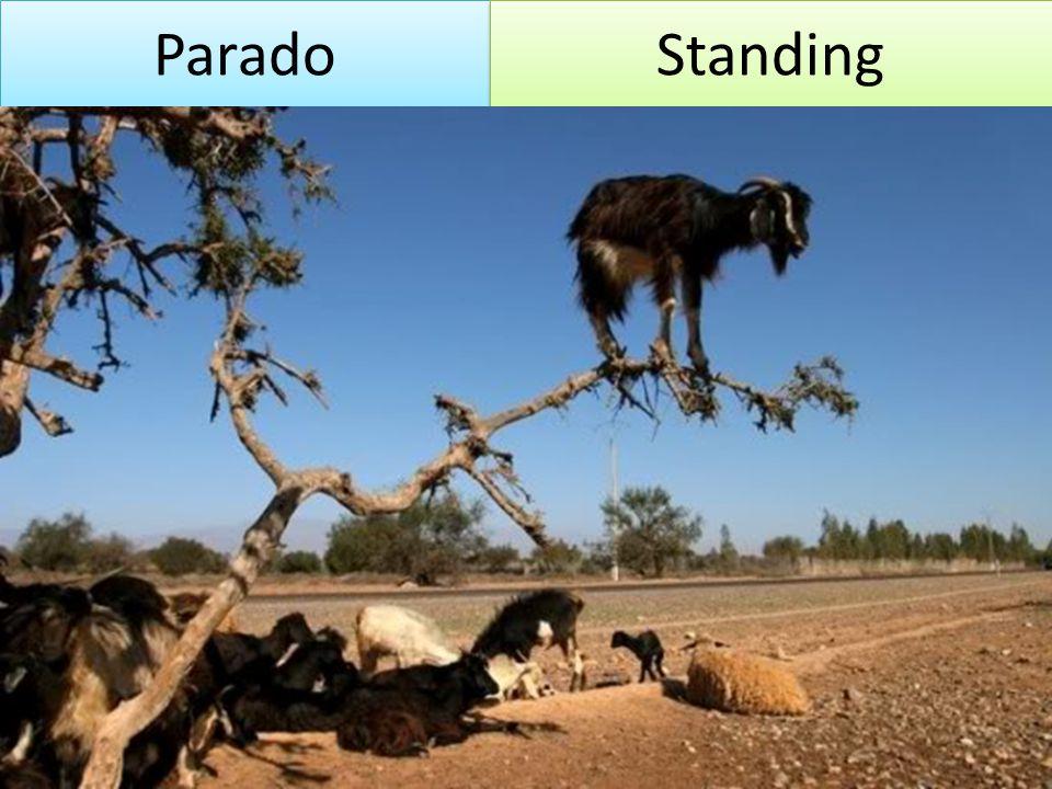 Parado Standing