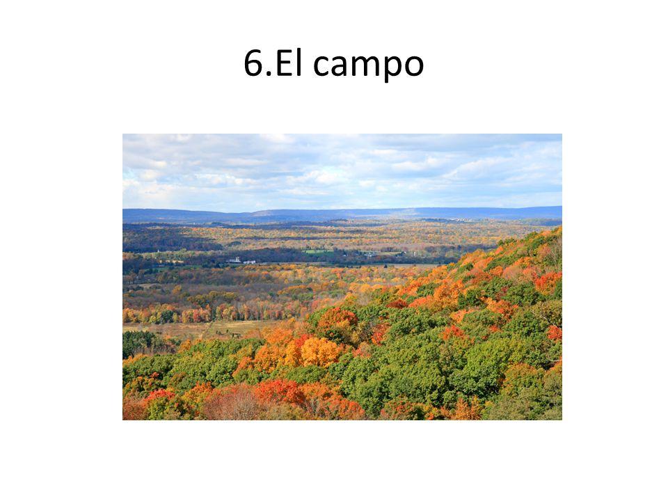 6.El campo