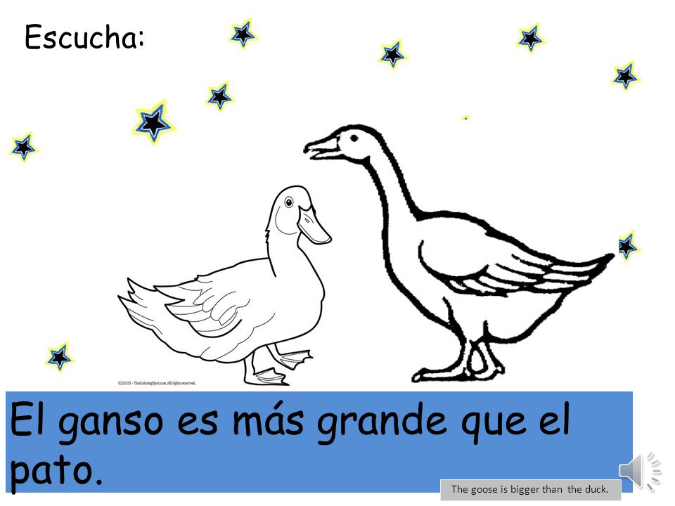 Escucha: mi El pato es más grande que la gallina. The duck is bigger than the chicken.