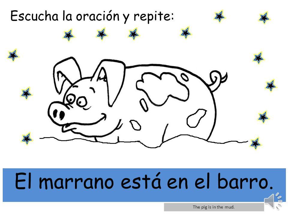 Escucha la oración y repite: mi El marrano está en el barro. The pig is in the mud.