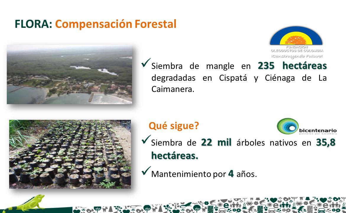 22 mil 35,8 hectáreas. Siembra de 22 mil árboles nativos en 35,8 hectáreas. 4 Mantenimiento por 4 años. FLORA: Compensación Forestal Qué sigue? 235 he