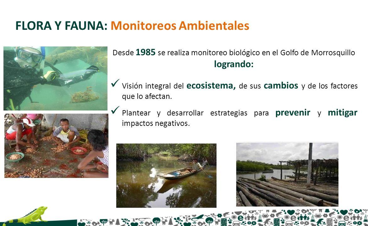 FLORA Y FAUNA: Monitoreos Ambientales Desde 1985 se realiza monitoreo biológico en el Golfo de Morrosquillo logrando: Visión integral del ecosistema,