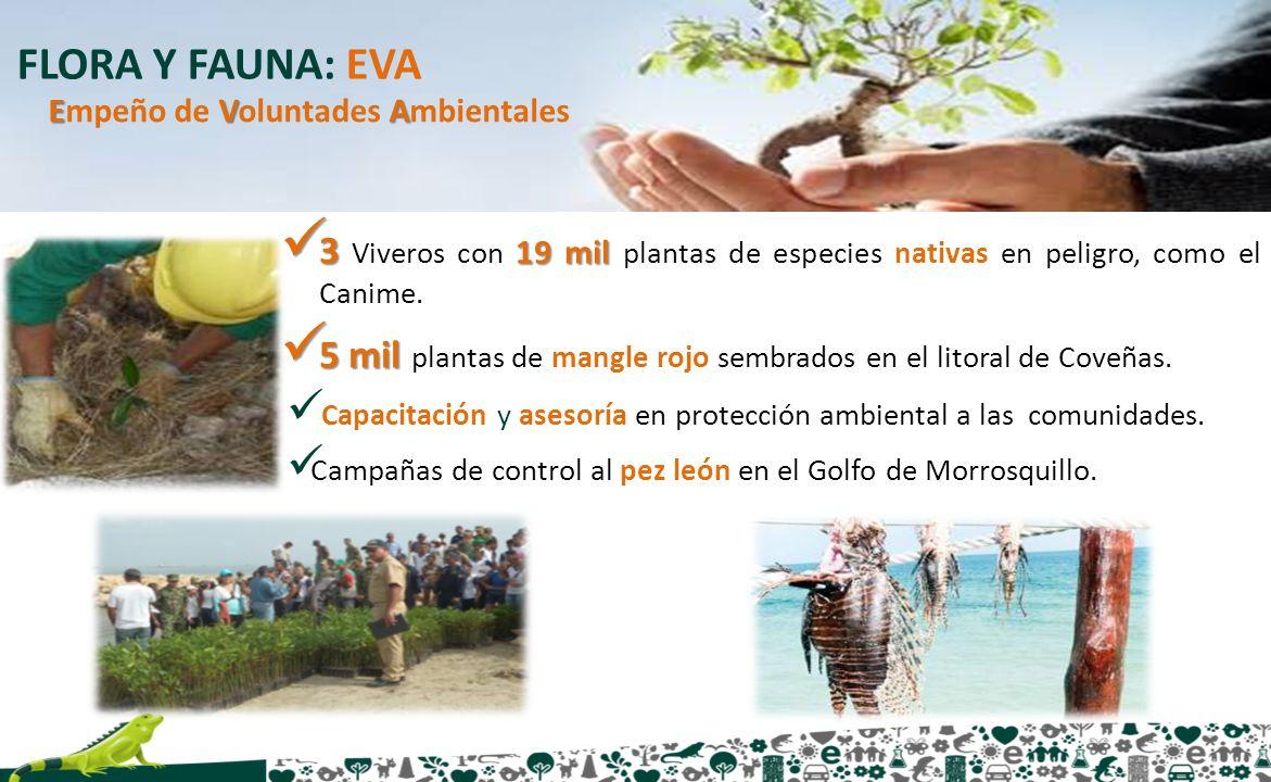 FLORA Y FAUNA: EVA 3 19 mil 3 Viveros con 19 mil plantas de especies nativas en peligro, como el Canime. 5 mil 5 mil plantas de mangle rojo sembrados