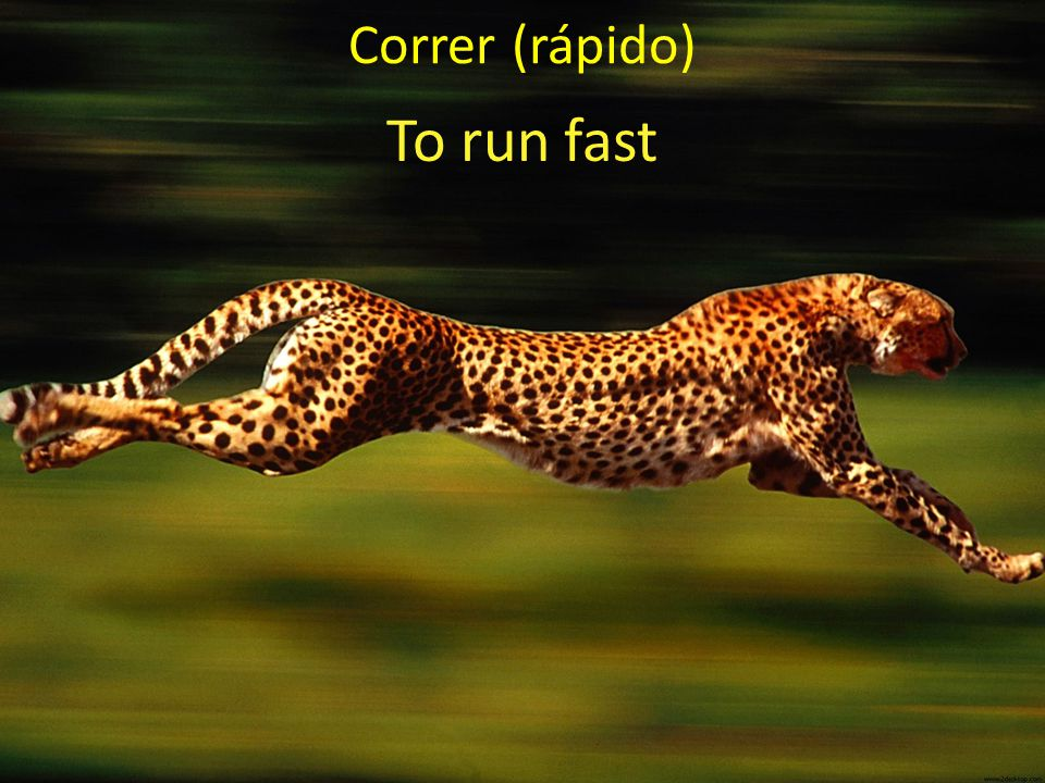 Correr (rápido) To run fast