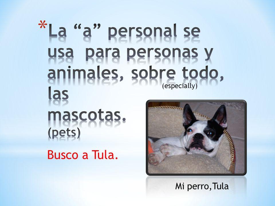 Busco a Tula. Mi perro,Tula (especially)
