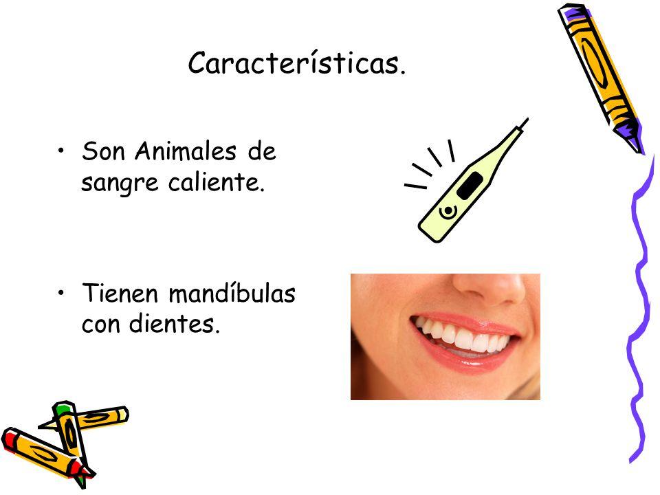 Características. Son Animales de sangre caliente. Tienen mandíbulas con dientes.