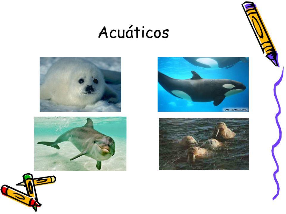 Acuáticos