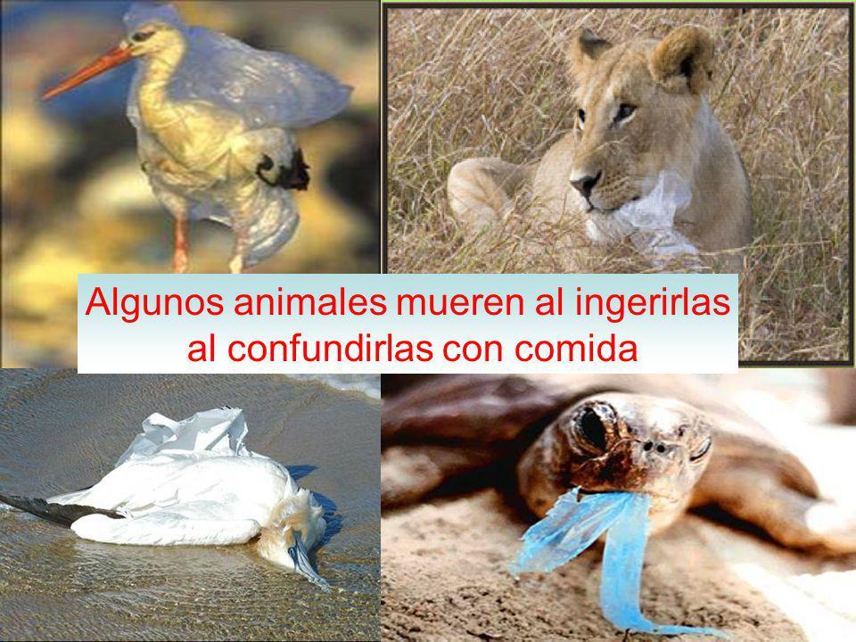 Algunos animales mueren al ingerirlas al confundirlas con comida