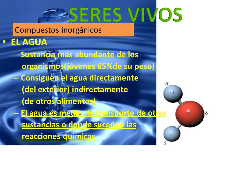 EL AGUA – Sustancia más abundante de los organismos(jóvenes 65%de su peso) – Consiguen el agua directamente (del exterior) indirectamente (de otros al