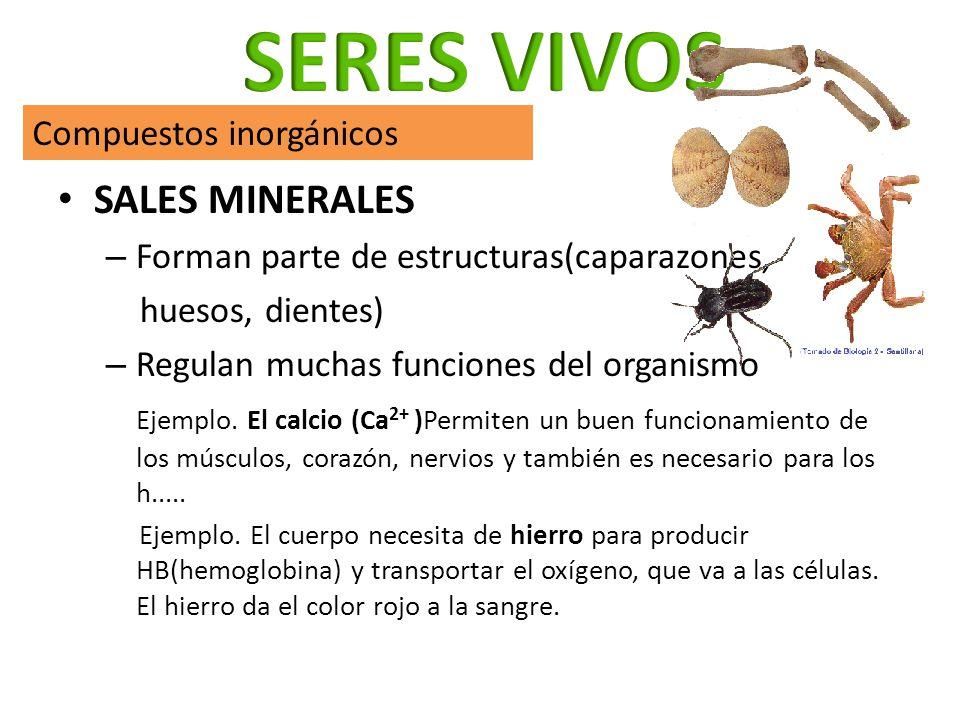 SALES MINERALES – Forman parte de estructuras(caparazones, huesos, dientes) – Regulan muchas funciones del organismo Ejemplo. El calcio (Ca 2+ )Permit