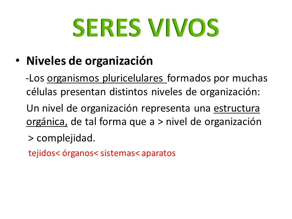 Niveles de organización -Los organismos pluricelulares formados por muchas células presentan distintos niveles de organización: Un nivel de organizaci