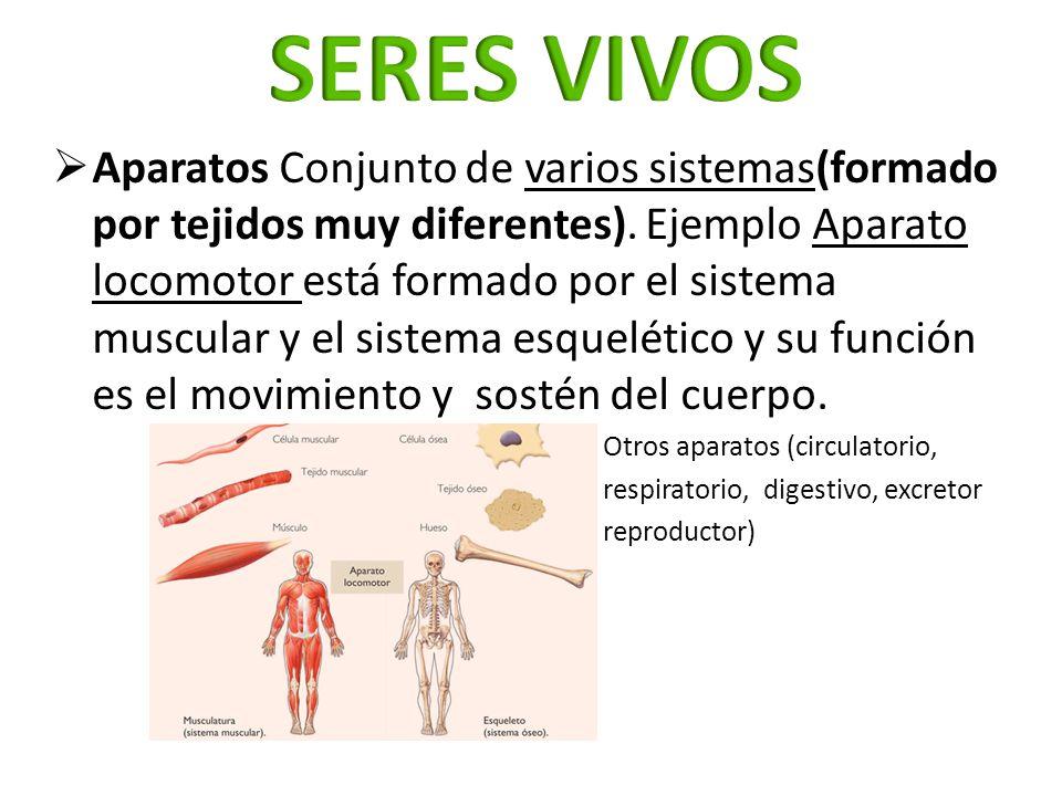 Aparatos Conjunto de varios sistemas(formado por tejidos muy diferentes). Ejemplo Aparato locomotor está formado por el sistema muscular y el sistema