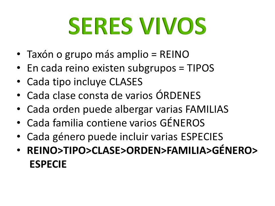 Taxón o grupo más amplio = REINO En cada reino existen subgrupos = TIPOS Cada tipo incluye CLASES Cada clase consta de varios ÓRDENES Cada orden puede