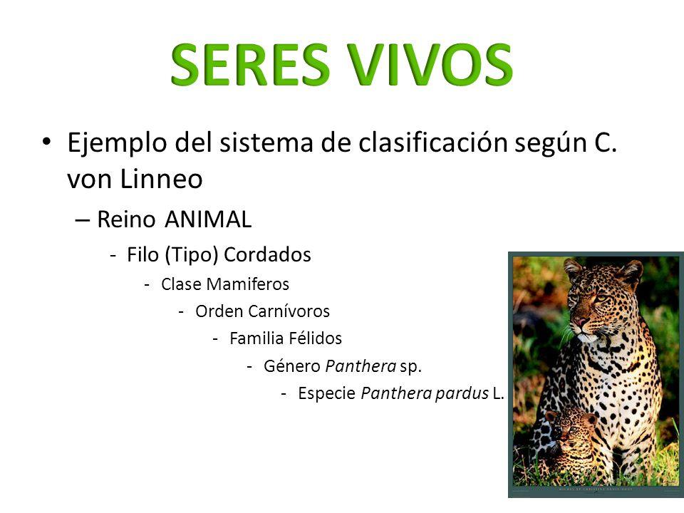 Ejemplo del sistema de clasificación según C. von Linneo – Reino ANIMAL -Filo (Tipo) Cordados -Clase Mamiferos -Orden Carnívoros -Familia Félidos -Gén