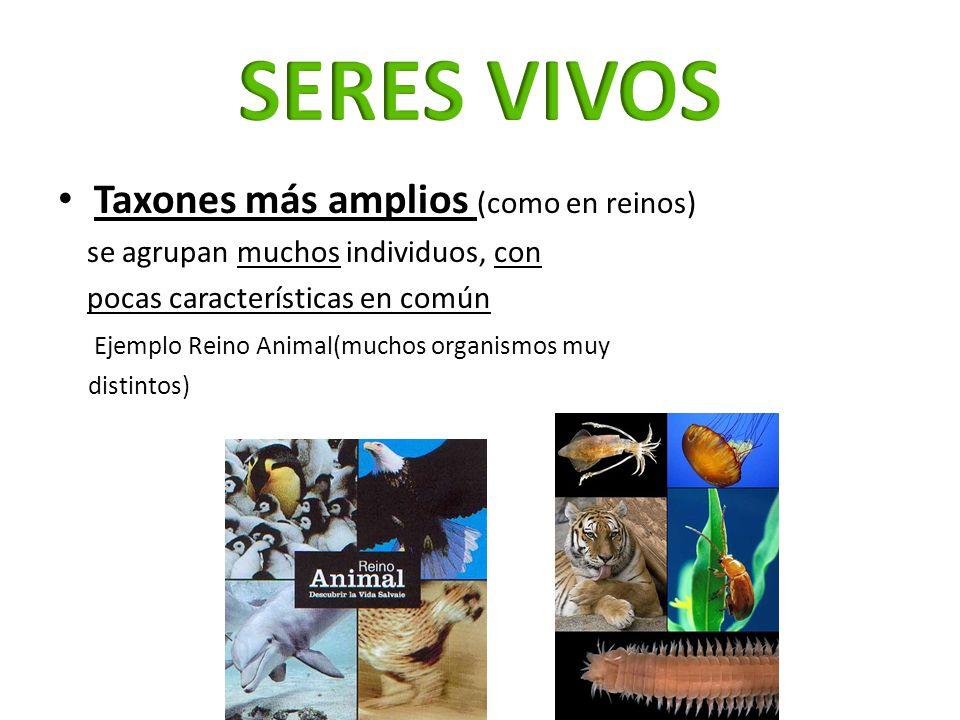 Taxones más amplios (como en reinos) se agrupan muchos individuos, con pocas características en común Ejemplo Reino Animal(muchos organismos muy disti