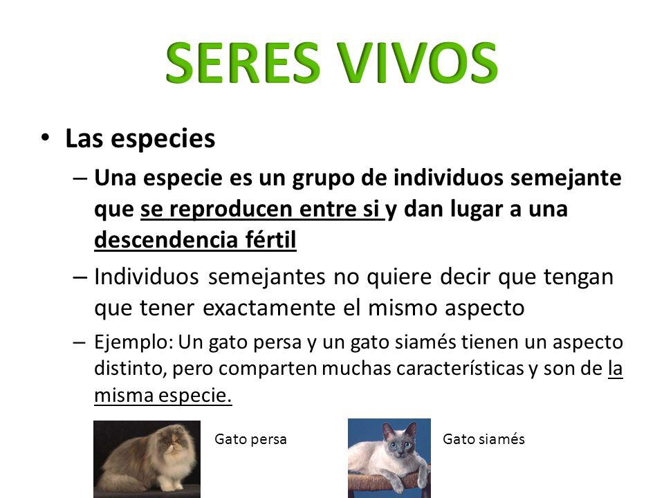 Las especies – Una especie es un grupo de individuos semejante que se reproducen entre si y dan lugar a una descendencia fértil – Individuos semejante