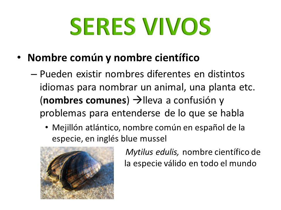 Nombre común y nombre científico – Pueden existir nombres diferentes en distintos idiomas para nombrar un animal, una planta etc. (nombres comunes) ll