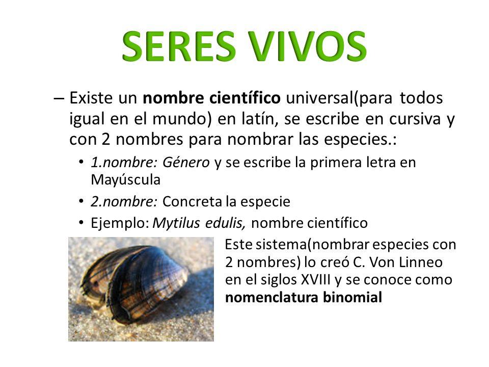 – Existe un nombre científico universal(para todos igual en el mundo) en latín, se escribe en cursiva y con 2 nombres para nombrar las especies.: 1.no