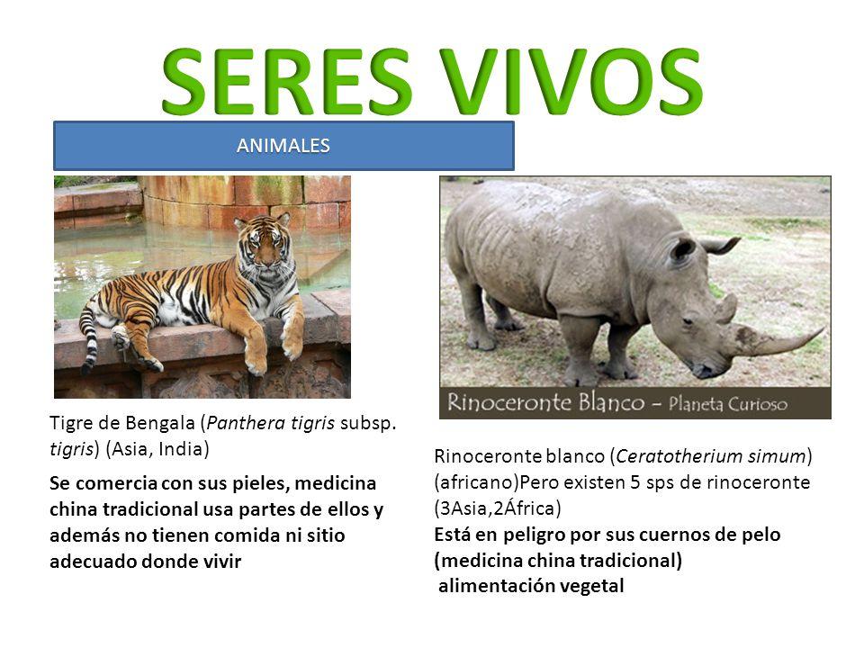 ANIMALES Tigre de Bengala (Panthera tigris subsp. tigris) (Asia, India) Rinoceronte blanco (Ceratotherium simum) (africano)Pero existen 5 sps de rinoc