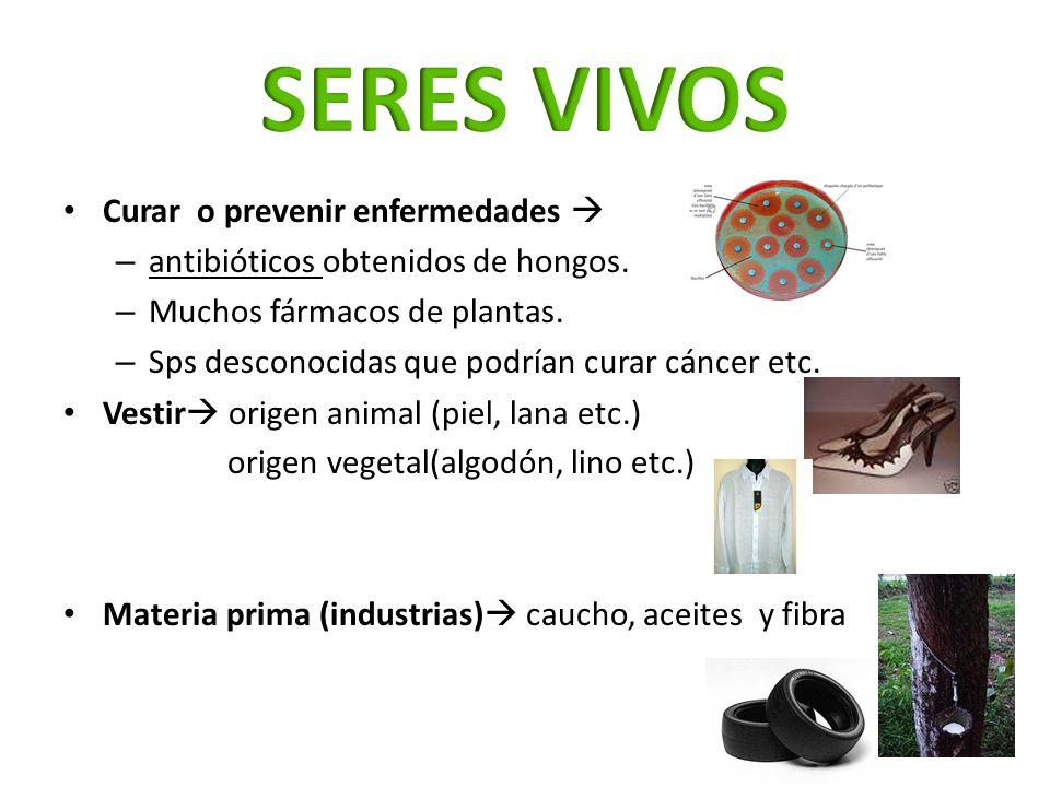 Curar o prevenir enfermedades – antibióticos obtenidos de hongos. – Muchos fármacos de plantas. – Sps desconocidas que podrían curar cáncer etc. Vesti