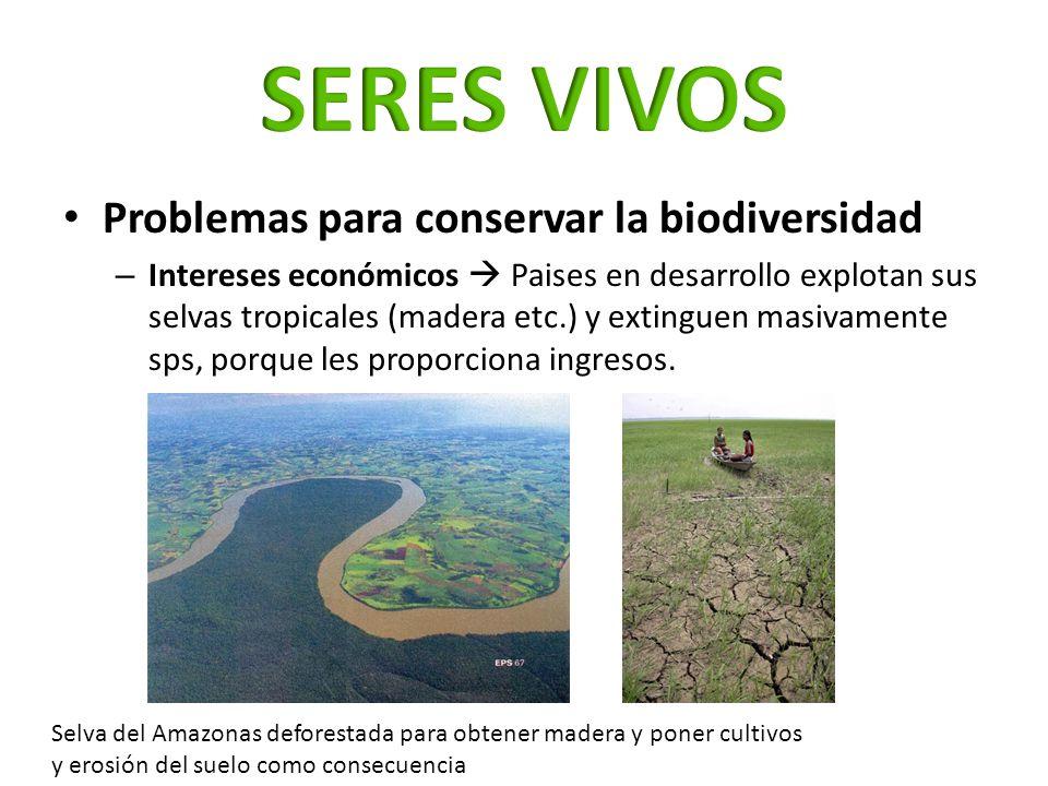 Problemas para conservar la biodiversidad – Intereses económicos Paises en desarrollo explotan sus selvas tropicales (madera etc.) y extinguen masivam