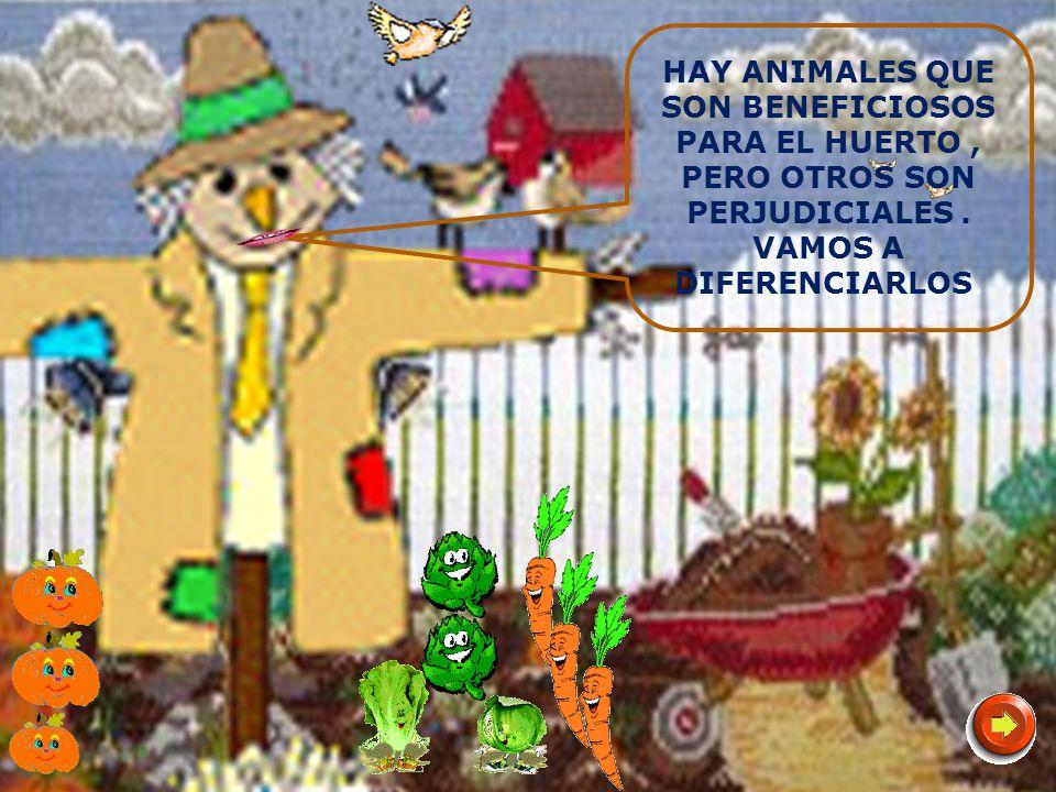 LOS BICHOS DEL HUERTO GRUPO DE TRABAJO HUERTO ESCOLAR 2011-2012 Nivel: Infantil y Primer Ciclo de Primaria Creación y Montaje : Profesorado de Infantil