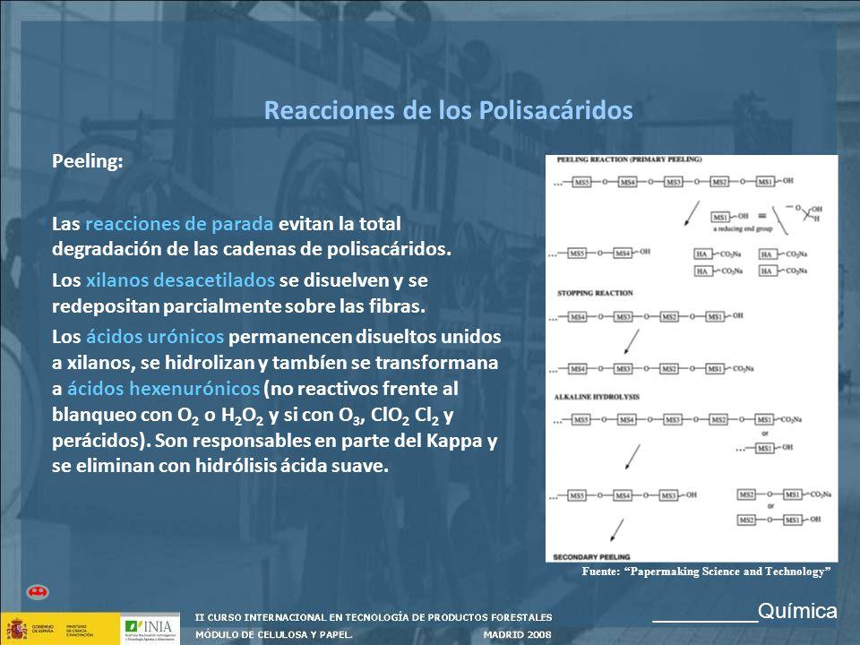 Reacciones de los Polisacáridos Peeling: Las reacciones de parada evitan la total degradación de las cadenas de polisacáridos. Los xilanos desacetilad