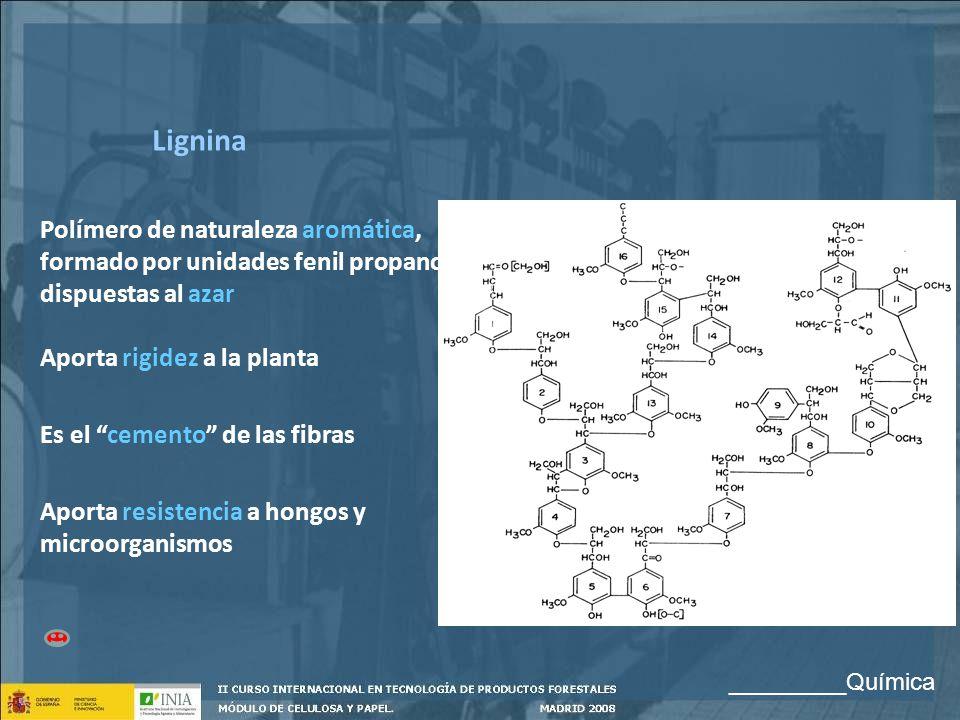 Lignina Polímero de naturaleza aromática, formado por unidades fenil propano, dispuestas al azar Aporta rigidez a la planta Es el cemento de las fibra