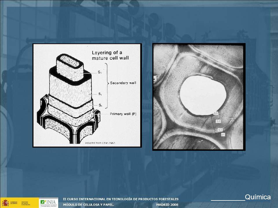 Distribución de los componentes mayoritarios en las fibras Celulosa: Su concentración baja desde la S3 y S2 hacia el exterior.