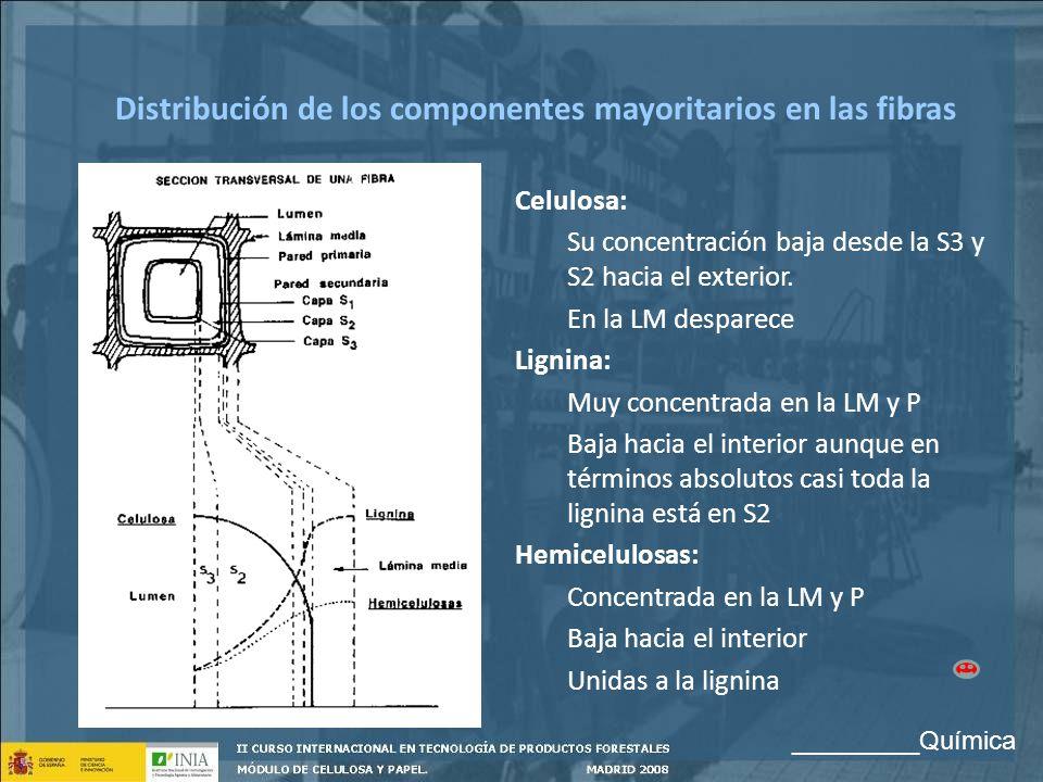 Distribución de los componentes mayoritarios en las fibras Celulosa: Su concentración baja desde la S3 y S2 hacia el exterior. En la LM desparece Lign