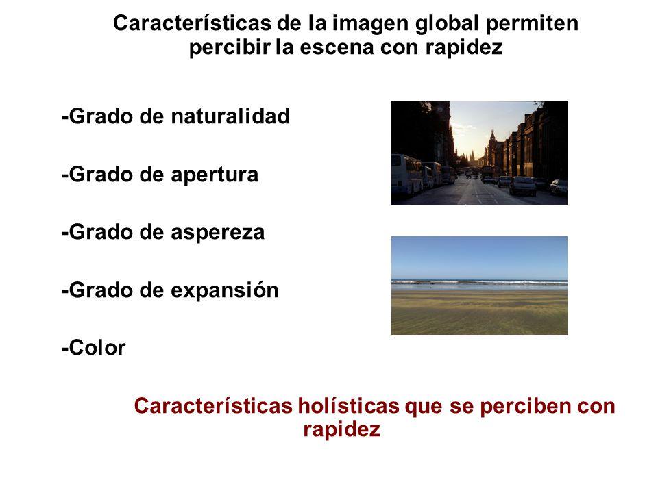 Características de la imagen global permiten percibir la escena con rapidez -Grado de naturalidad -Grado de apertura -Grado de aspereza -Grado de expansión -Color Características holísticas que se perciben con rapidez
