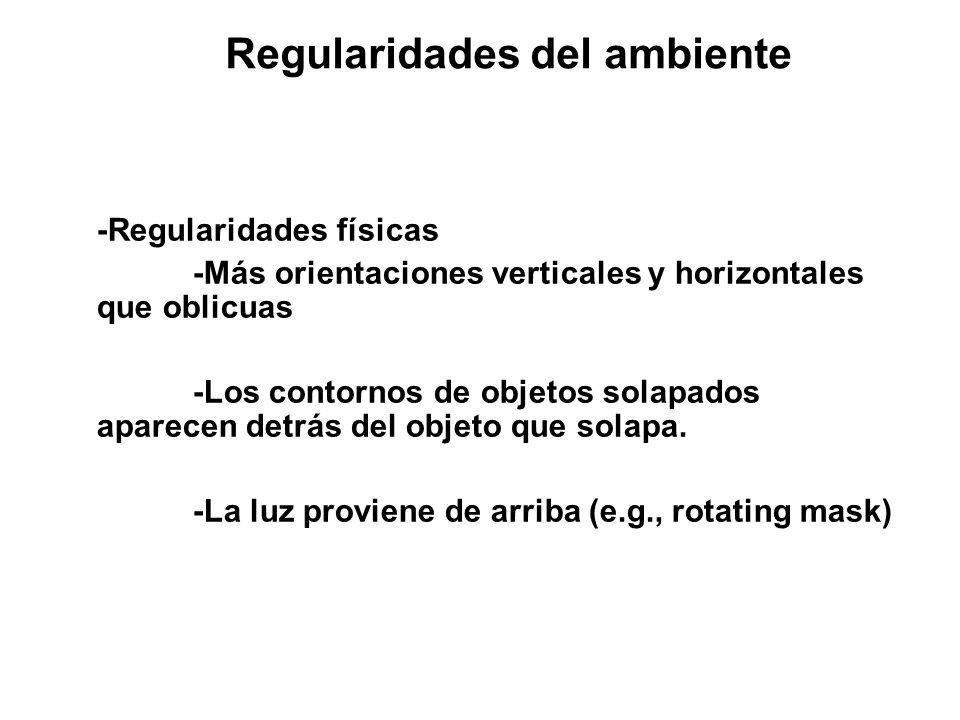 Regularidades del ambiente -Regularidades físicas -Más orientaciones verticales y horizontales que oblicuas -Los contornos de objetos solapados aparecen detrás del objeto que solapa.