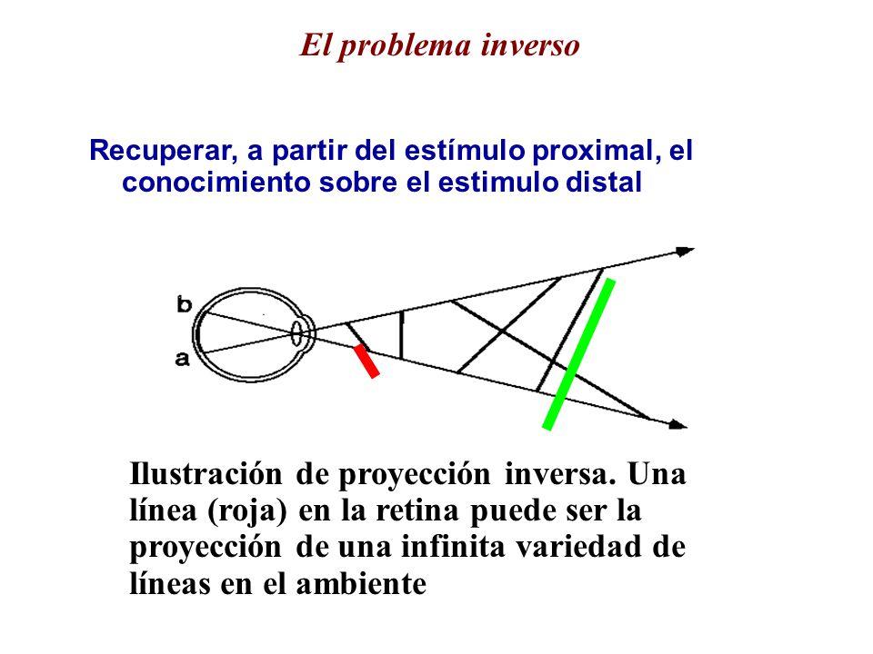 Recuperar, a partir del estímulo proximal, el conocimiento sobre el estimulo distal El problema inverso Ilustración de proyección inversa.